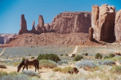 Monument Valley horse
